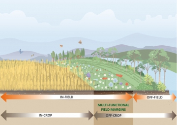 Multi-functional field margins in agriculture landscapes