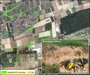 The Eh da-Initiative: A Project to Support Bees in Agricultural Landscapes